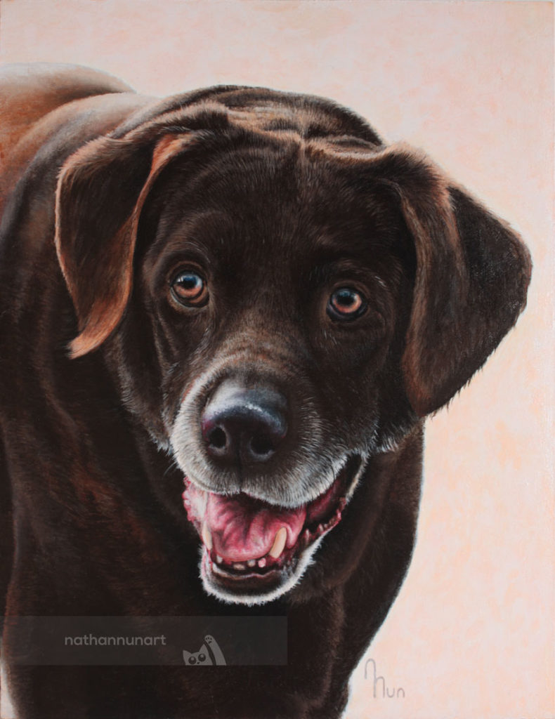 Pet portrait of a labrador