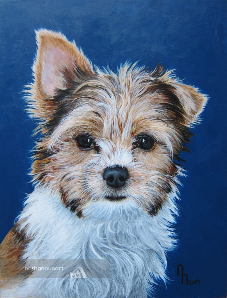 Custom pet portrait of a Parti Yorkie named Tommy.