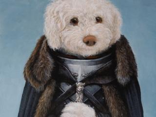 Portrait of a dog as Jon Snow