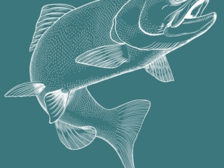 Illustration of a fish for grocery store seafood section wall.