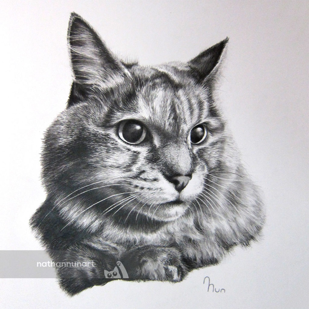 Pencil portrait of a cat