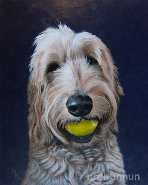 Pet portrait of a dog named Harvey