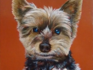 Commissioned portrait of a terrier